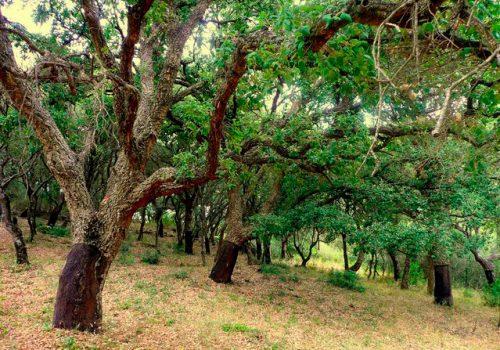 Sierra de Los Alcornocales